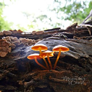 "Mushrooms are ""something squishy"" in a campground photo scavenger hut for teens. 