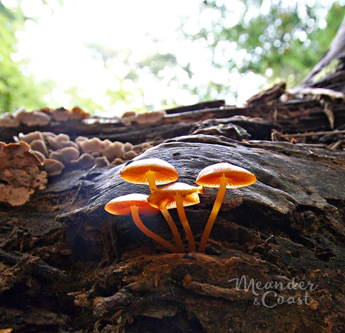 """Mushrooms are """"something squishy"""" in a campground photo scavenger hut for teens. 