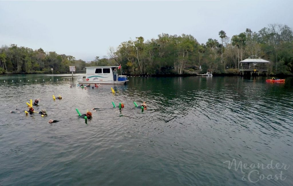 Swim with Manatees in Homosassa Springs Florida. I'd love to see a manatee in the wild! | MeanderAndCoast.com #manatees #swimwithmanatees #crystalriver #homosassa